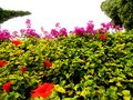 Plants in Cyprus