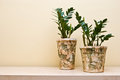 Plants in decorative clay pots two leafy green earthy Royalty Free Stock Photo