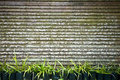 Plants and fence Royalty Free Stock Photo