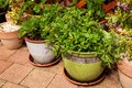 Plants in flowerpots green the garden Stock Photos