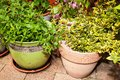 Plants in flowerpots green the garden Royalty Free Stock Photos