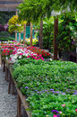 Plants and flowers for sale colorful bedding hanging baskets are arranged at a local nursery Royalty Free Stock Images