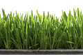 Plants foreground on white background Royalty Free Stock Photo
