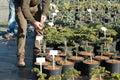 Plants At Garden Center Kostelec