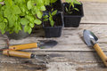 Plants and gardening tools Royalty Free Stock Photo