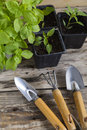 Plants with gardening tools Royalty Free Stock Photo