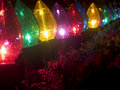 Plants in garish Christmas lighting Royalty Free Stock Photos