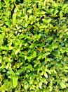 Plants green grass leave Stock Photography