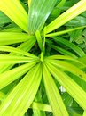 Plants green grass leave Royalty Free Stock Photo