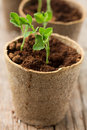 Plants growing in biodegradable plant pots Stock Image