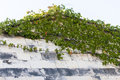 Plants growing on the roof. Royalty Free Stock Photography