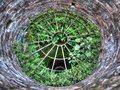 Plants growing in a well hdr photography Royalty Free Stock Photo