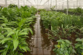 Plants in a hydroculture plant nursery Royalty Free Stock Image