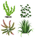 Plants illustration of the on a white background Royalty Free Stock Images