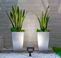 Plants in the interior Royalty Free Stock Photo