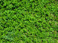 Plants Natural Texture Royalty Free Stock Photo