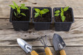 Plants in pots with gardening tools Royalty Free Stock Photo