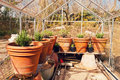 Plants on pots in glasshouse countryside during spring Royalty Free Stock Images