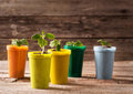 Plants in pots on wooden background young Stock Images