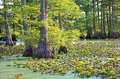 Plants in Reelfoot Lake Royalty Free Stock Photo