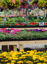 Plants for sale colorful bedding are arranged in a rainbow of colors at a local nursery Royalty Free Stock Photography