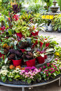 Plants for sale in nursery plant store with many on display rack Royalty Free Stock Image