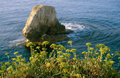 Plants on seacoast against the backdrop of cliffs Royalty Free Stock Photo