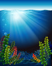 Plants under the sea illustration of Royalty Free Stock Images