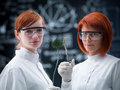 Plants versus technology close up of two women in a laboratory comparative analyzing a plant and a hard disk Stock Photo