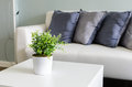 Plants in white vase on white table with sofa Royalty Free Stock Photo
