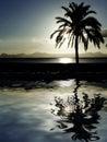 Plażowej nocy, sunset palm tree Fotografia Royalty Free