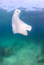 Plastic bag on a coral reef waste floating above green water and dead seabed manmade pollution is having dramatic effect ocean Stock Image