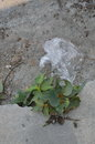 Plastic bag drop on ground Royalty Free Stock Photo