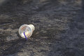 Plastic cup on a ground. Royalty Free Stock Photo