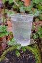 Plastic cup with water on a wooden log Royalty Free Stock Photo