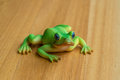 Plastic frog Royalty Free Stock Photo