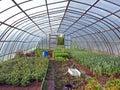 Plastic greenhouse inside Stock Photo