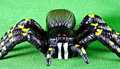 Plastic spider Royalty Free Stock Photo