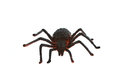 Plastic spider isolated on white background Royalty Free Stock Photos