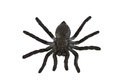 Plastic spider isolated on white background Stock Images