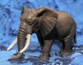 Plastic toy elephant Royalty Free Stock Photo