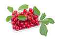 Plastic tray with sweet cherries and branches with leaves Royalty Free Stock Photo