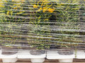 Plastic wrapped plants ready for export Royalty Free Stock Image