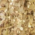 Platan tree bark Royalty Free Stock Photo