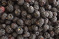 Plate with berries black blackberries Royalty Free Stock Photo