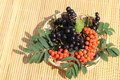 Plate with berries of a red mountain ash and chokeberry standing on straw napkin in garden Stock Photos