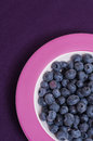 Plate with bilberries Stock Photography