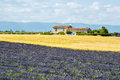 Plateau de valensole provence house alpes haute alpes cote d azur france country and field of lavender Royalty Free Stock Photo