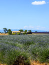 Plateau de valensole provence lavender alpes haute alpes cote d azur france country house and field of Stock Photos