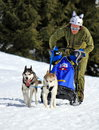 Plateau mosses la lecherette march international race sled dogs march plateau mosses la lecherette switzerland Stock Image
